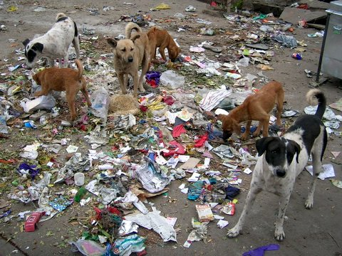 Image result for dogs eating garbage